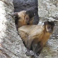 Alle scimmie piace il rischio. Ma non l'azzardo