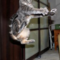 """Gatti """"marziali"""": le pose dei felini come quelle dei ninja"""