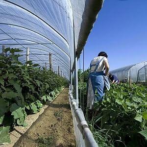 Imu agricola: esenzione totale per 3.456 comuni montani