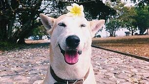 Gluta, il cane che sa solo ridere