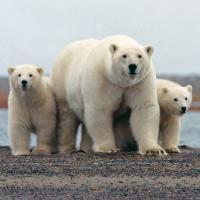 Alaska. L'eden nordico che Obama vuole salvare