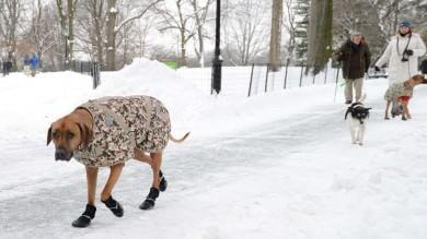 New York sotto la neve, strade riaperte Allerta annullata, il meteorologo si scusa