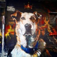 Loukanikos, il cane anti-Troika, grande assente alla festa di Tsipras