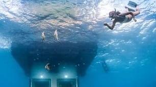 Dormire in un acquario dove sono i pesci a guardarti