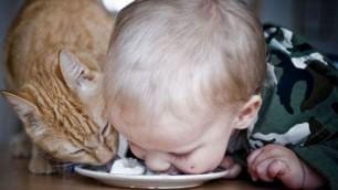 A lezione da cani e gatti I bimbi si credono animali