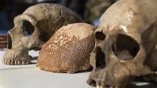 Il teschio che incrocia Neanderthal e Sapiens