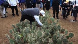 La pallina persino tra i cactus Il peggior Tiger Woods della storia