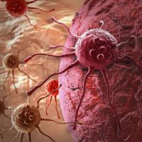 Scoperto il punto debole delle cellule tumorali,è il telomero
