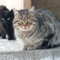 """Animali, Aida&a denuncia: """"Nel 2014 mangiati in Italia oltre 6mila gatti"""""""
