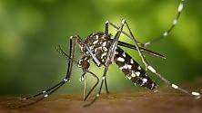 Usa, pronte zanzare Ogm contro malattie 'esotiche'