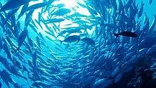 Race for Water studierà la plastica negli oceani