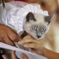 È la Giornata del gatto, superstar del web