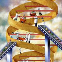 Dna, decifrata la sinfonia della vita: ecco la mappa dell'attività dei geni