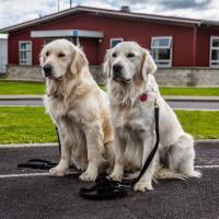 Lavori da cani: eroi a quattro zampe