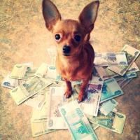 Altro che vita da cani: ecco i ricchi a quattro zampe