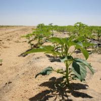 """Frilli: """"Meno frutti, raccolti più poveri, il grande rischio per l'agricoltura"""""""