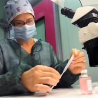 Artrosi, ottenuta cartilagine in provetta per riparare i danni
