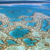 """I coralli australiani """"mangiano"""" la plastica. """"Ecosistemi a rischio"""""""