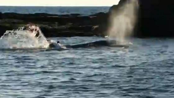"""Il tuffo di Debora per salvare la balena: """"Amo il mare, non potevo lasciarla morire"""""""