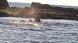 Il tuffo di Debora per salvare la balena: 'Non doveva morire'
