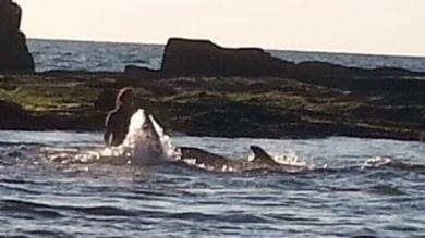 Il tuffo di Debora per salvare la balena 'Non la dimenticherò mai'    videointervista