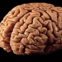 Cervello, scoperti i neuroni che prevedono il futuro
