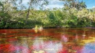 Caño Cristales, il fiume bello come un arcobaleno