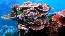 "I coralli australiani ""mangiano"" la plastica"