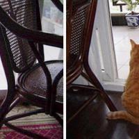 Piccoli gatti crescono: com'erano e come sono oggi