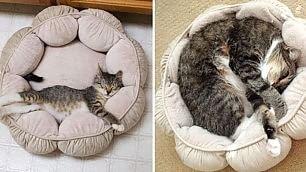 Piccoli gatti crescono com'erano e come sono oggi