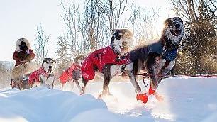 La Mille Miglia dei cani da slitta