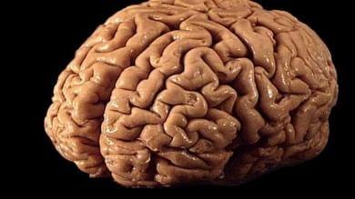 Scoperti i neuroni che prevedono il futuro
