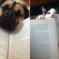 Cani e gatti, quando leggere è impossibile