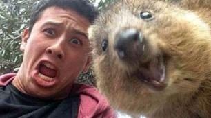 Sorridi, c'è anche il quokka La nuova frontiera del selfie