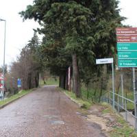Maltempo, donna muore sotto un albero sradicato dal vento a Urbino