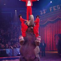 Ringling Brothers Circus, niente più elefanti a partire dal 2018