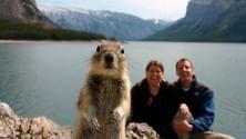 Photobombing dello scoiattolo nelle grandi foto desktop