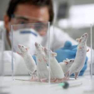 Un ricordo artificiale impresso per la prima volta nella mente di un topo