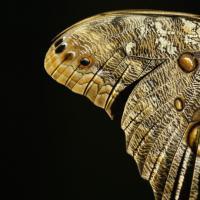 California, lo zoo di San Diego si colora di farfalle