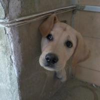 Mi si è incastrato il cane: le scelte sbagliate dei cuccioli