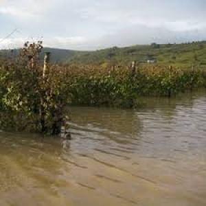 """Fao: """"L'agricoltura il settore più colpito dai disastri ambientali"""""""