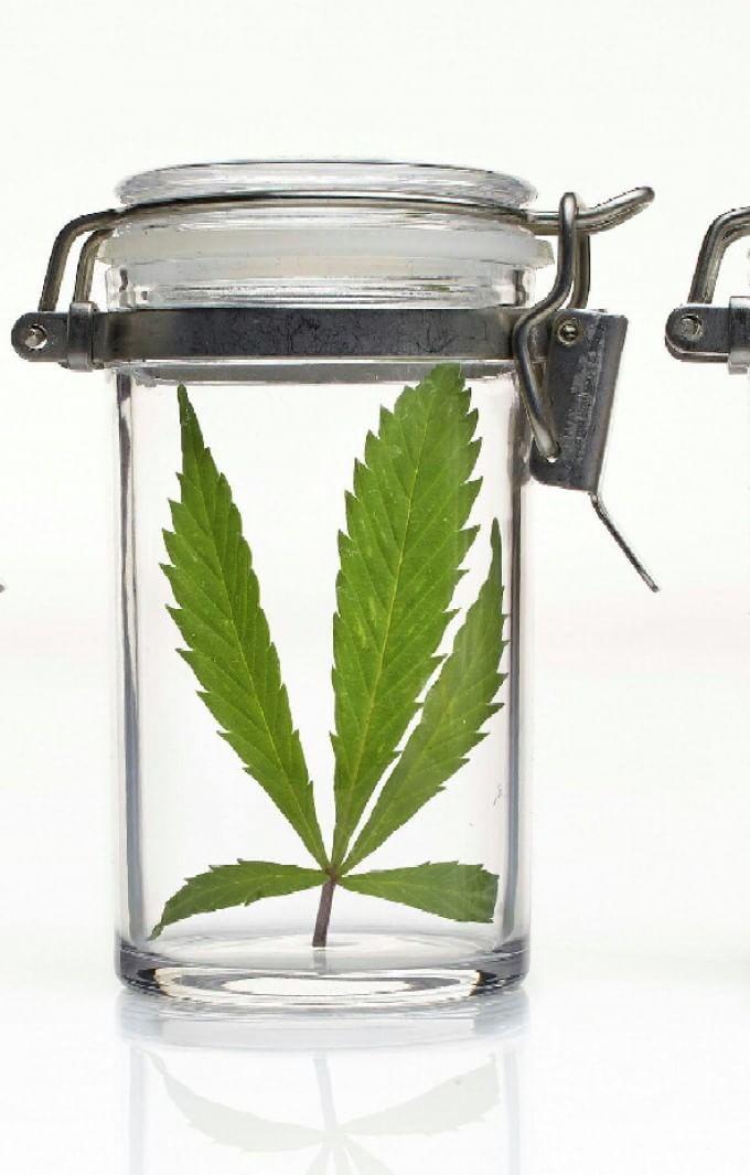 Tra i militari che coltivano la marijuana di Stato