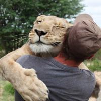 La storia della leonessa che abbraccia l'uomo diventa un film