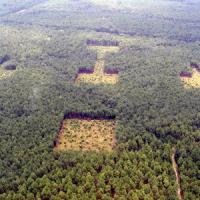 Allarme foreste: i polmoni verdi della Terra mai malati quanto ora
