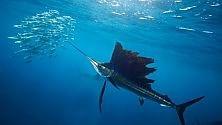Le specie marine minacciate da perdita ossigeno dei mari