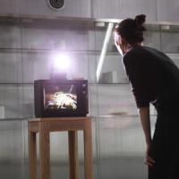 Arte interattiva. La mostra coreana a Firenze