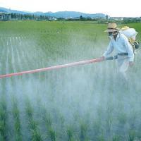 """""""Quel pesticida è un probabile cancerogeno"""": è battaglia tra Iarc e Monsanto, produttore..."""