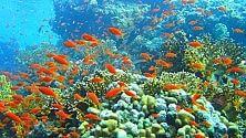 Il piano per salvare la Grande barriera corallina