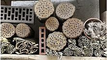Come costruire un hotel per insetti