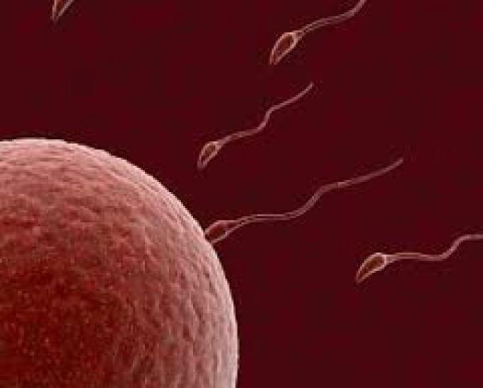 Allarme pesticidi in frutta e verdura: riducono la fertilità maschile
